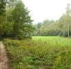 Der Birkenspinner; Bild 2