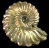 Schillernde Ammonitenschale; Bild 3