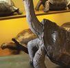Abingdon-Galapagosschildkröte; Bild 0