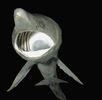 Riesenhai; Bild 0