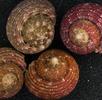 Erfassung in der Molluskensammlung; Bild 1