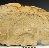 Stromatolith; Bild 0