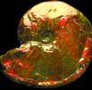 Schillernde Perlmuttschicht - Ammolit; Bild 4