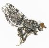 Die Pfauenfliege (Ulidiidae -Schmuckfliege),; Bild 4