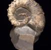 Schale aus Aragonit; Bild 2