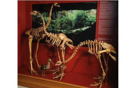 Pleistozän