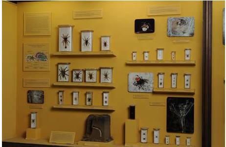 Vitrine 25a im Saal XXIV zeigt einen kleinen Auszug aus der wissenschaftlichen Sammlung.; Foto: A. Schumacher, NHM Wien