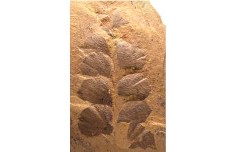 Die ersten Waldbewohner (1998B-0022-0001)