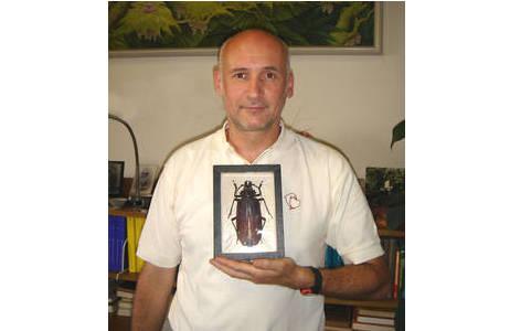 Riesenbockkäfer (Titanus giganteus (L., 1771)) (Coleoptera: Cerambycidae); Foto: M.A. Jäch- NHM Wien