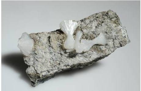 Noch nicht inventarisierte Kleinstufe mit garbenförmigen weißen Stellerit-Kristallaggregaten auf Prehnit-Kristallrasen (Madererspitze, Montafon); Foto: A. Schumacher, NHM Wien