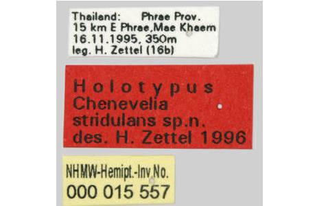 Fundortetikett (oben), Typusetikett (Mitte), Sammlungsetikett (Inventarnummer; unten) eines trocken konservierten Insekts (Holotypus von Chenevelia stridulans, Veliidae; Foto: H. Bruckner, NHM Wien