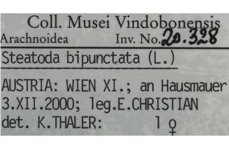 Steatoda bipunctata (Linnaeus, 1758) – Etikett mit allen wichtigen Angaben; leg. = legit (gesammelt von); det. = determinavit (bestimmt von); Foto: NHM Wien