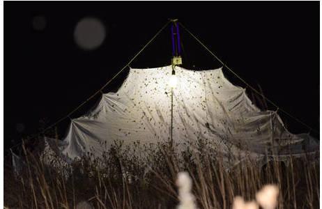 Beim Lichtfang mit Tuch wird meist ein Gaze- oder Baumwolltuch verwendet, über dem die Lampen angebracht werden. Das Tuch dient der Reflexion des Lichts; Foto: S. Saadain, NHM Wien