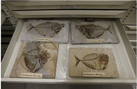 Im Depot der geologisch-Paläontologischen Abteilung; Foto: Prammer-Reuters, NHM Wien