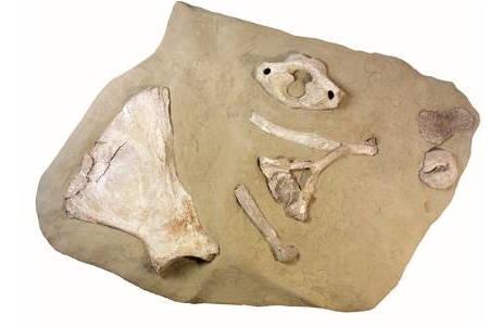 Die Mammutjägerstation Ruppersthal (1980-0029-0007)