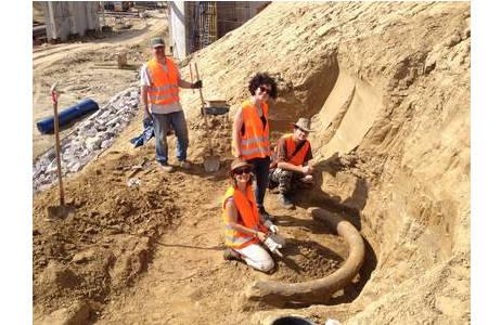 Freilegung eines Mammutstoßzahns durch das PaläontologInnen-Team des NHMW; Foto: NHM Wien