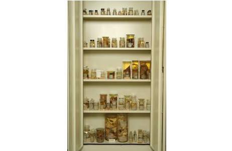 Kasten mit Alkoholpräparaten in der Nass-Sammlung; Foto: NHM Wien, Molluskensammlung