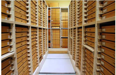 Hemiptera Sammlung: Blick aus dem Gang der Kompaktanlage auf Regale mit alten Sammlungsladen.; Foto: H. Bruckner, NHM Wien