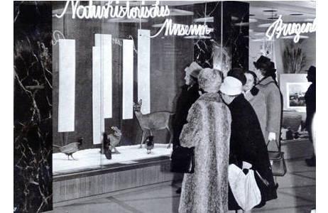 Unbekannter Fotograf, 1961 bekommt das Museum eine Werbeauslage in der Bellaria Unterführung, Wien 1961; Foto: NHM Wien, Archiv für Wissenschaftsgeschichte
