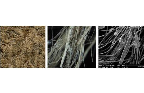 Fasern im Rasterelektronenmikroskop; Foto: C. Gengler
