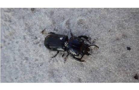 In den faszinierenden Biotopen der Archbold Biological Station wurden zahlreiche interessante Insektenarten gefunden; Foto: H. Shaverdo