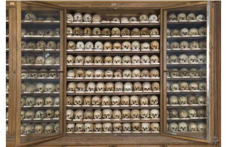 Teil der Skelettsammlung am Naturhistorischen Museum Wien; Foto: W. Reichmann, NHM Wien
