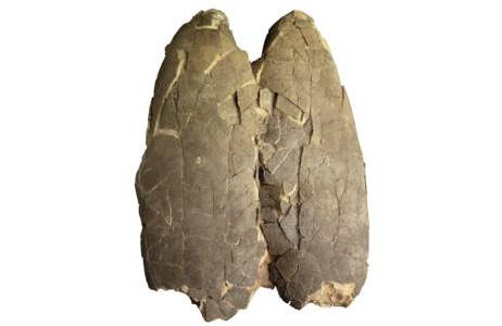 Eier eines Tarbosaurus (1995-0029-0000)