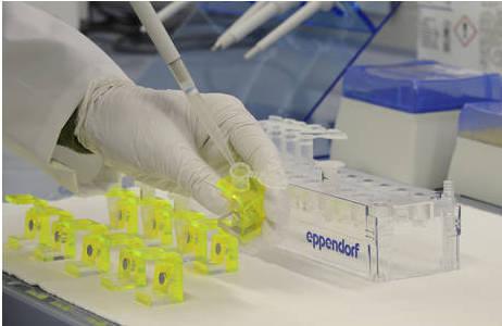 Extraktion der DNA im Reinraum der Zentralen Forschungslaboratorien; Foto: NHM Wien, K. Kracher
