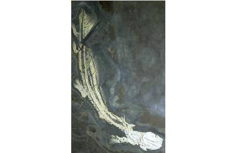Stachelhai (1988-0054-0000)