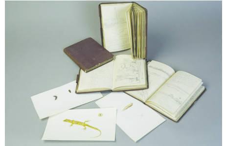 Technik: Bleistift und Tusche Aquarelliert (Bilder), Handschrift und Zeichnungen mit Bleistift (Tagebücher), Künstler: Georg von Frauenfeld