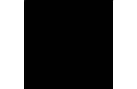 Steatoda bipunctata (Linnaeus, 1758) – Alkoholpräparat, Detailansicht ventral, hier sieht man die die weibliche Geschlechtsöffnung (Epigyne), die zur Artbestimmung herangezogen wird; Foto: NHM Wien