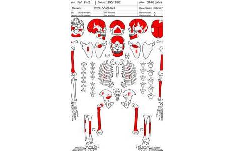 Grafische Dokumentation der erhaltenen Skelettteile.; Foto: NHM Wien