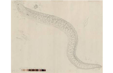 Technik: Bleistiftzeichnung, Aquarell, Künstler: Ferdinand Lucas Bauer