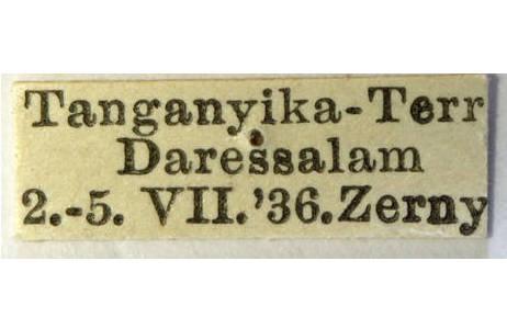 Afrikanische Blütenmantis (Pseudocreobotra wahlbergii), Fundortetikett; Foto: NHM Wien, H. Bruckner