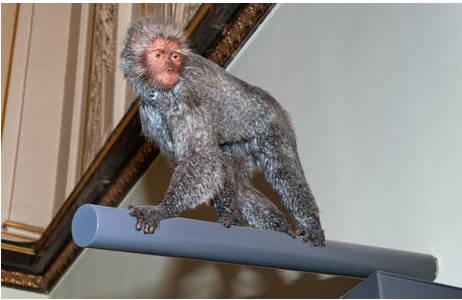 Rekonstruktion des möglichen Erscheinungsbildes eines Proconsuls, Iris Rubin, Zoologische Hauptpräparation; Foto: W. Reichmann, NHM Wien
