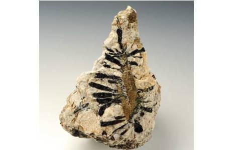 Großstufe (25 cm) mit schwarzen Schörl-Prismen, kristallisiert auf einem Biotit-Kristallkeim (Pegmatitvorkommen Trastallhof, Waldviertel); Foto: A. Schumacher, NHM Wien