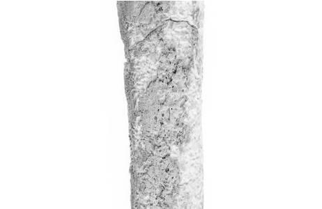 Detailansicht der Auflagerung am Oberschenkelknochen; Foto: W. Reichmann, NHM Wien