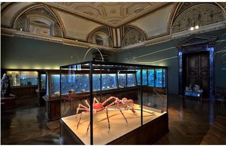 Die neue Vitrine mit den Riesenseespinnen im Saal 23; Foto: K. Kracher, NHM Wien