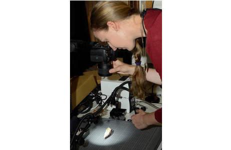 Fotografie der Schärfeebenen mit Nikon D7200, befestigt an einem KAISER RS2 XA Reproständer mit Objekttisch ; Foto: K. Kracher, NHM Wien