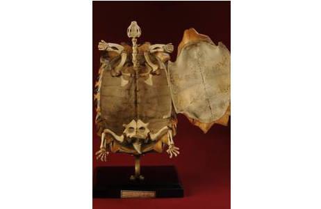 Tiefspeicher der Herpetologischen Sammlung; Foto: A. Schumacher, NHM Wien