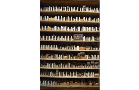Blick in die Sammlung mit unzähligen Sammlungsobjekten; Foto: NHM Wien