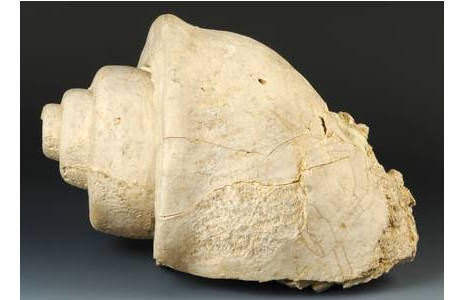 Steinkern einer Leviathan-Schnecke (2011-0347-0001)