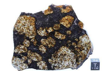 Steinmeteorit NWA 10244; Foto: NHM Wien, L. Ferrière