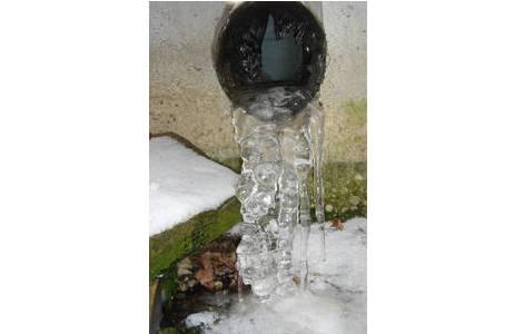 Abb. 1: Langdauernder, tiefer Frost zerstört viele der überwinternden Insektenstadien; Foto: M. Lödl, NHM Wien
