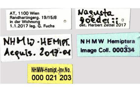 Etiketten; Foto: H. Bruckner, NHM Wien
