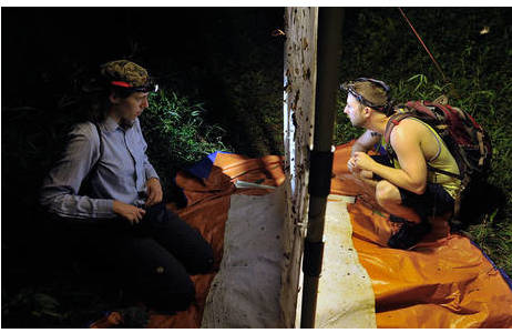 Teilnehmer der Vietnam-Expedition (2017) beim Lichtfang. Dr. Dominique Zimmermann (NMW, Hymenoptera) und Dr. Adam Brunke (CNC, Coleoptera).