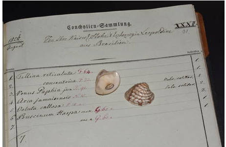 Original Venusmuschel und Acquisitionseintrag aus dem Jahr 1821; Foto: S. Schnedl, NHM Wien