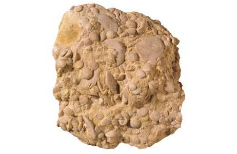 Nummuliten aus der Pyramide von Gizeh (1831-0012-0003)