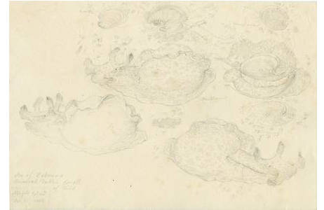 Technik: Bleistiftzeichnung, Künstler: Ferdinand Lucas Bauer
