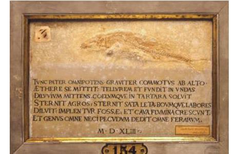Kalkplatte mit fossilem Fisch mit Vergil-Cento (1880-0017-0995)